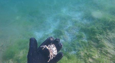 Çürüyen deniz salyası dehşete düşürdü