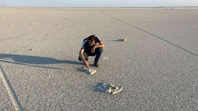 Tuz Gölü'nde toplu flamingo ölümleri