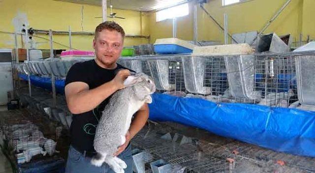 Öğretmenliği bıraktı tavşan çiftliği kurdu