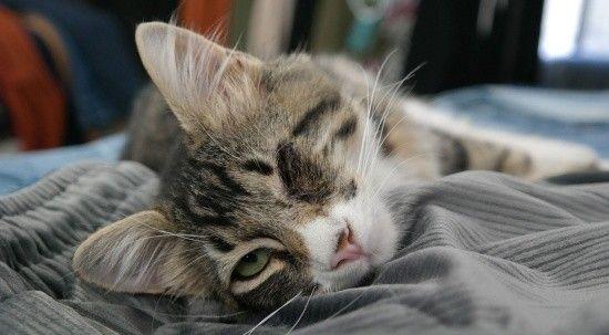 Bilim adamları, kedi videoları izleyecek gönüllüler arıyor