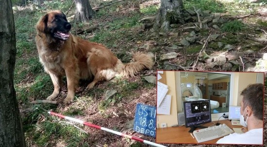 Sahibiyle gezmeye çıkan köpek hazine buldu