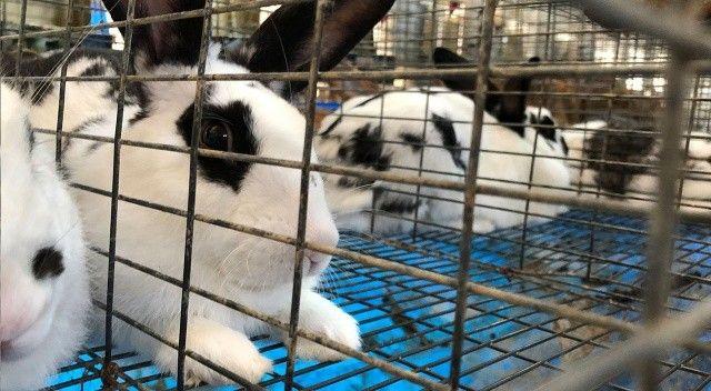 Tavşanlar 180 kişinin hayatını değiştirdi: Ayda 10 bin lira kazanıyorlar