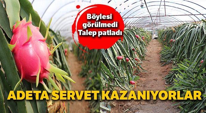 Talep patladı... Pitaya bahçesi adeta servet kazandırıyor