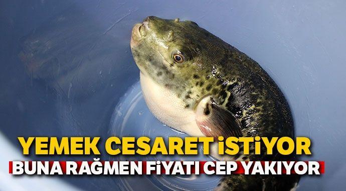 Zehirli balon balığını yemek cesaret istiyor, buna rağmen fiyatı cep yakıyor