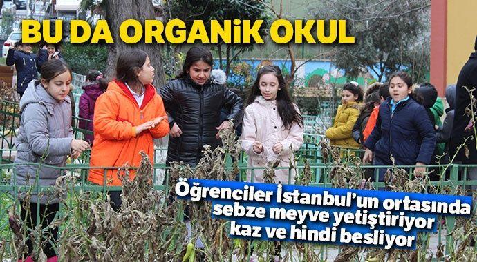 Bu da organik okul... Öğrenciler İstanbul'un ortasında sebze meyve yetiştiriyor