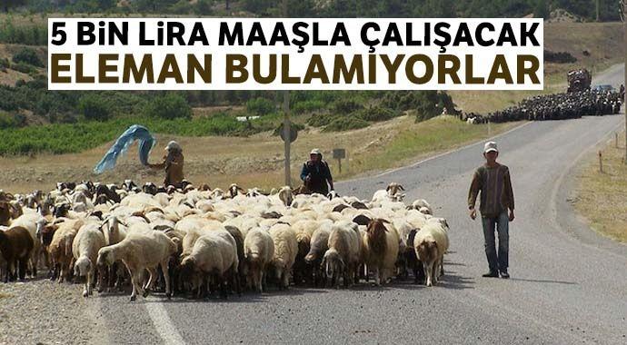 5 bin lira maaşla çoban bulamıyorlar