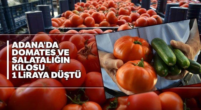 Domates ve salatalığın kilosu 1 liraya düştü ile ilgili görsel sonucu
