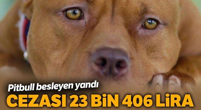 Van'da 'pitbull' besleyen kişiye 23 bin 406 lira ceza