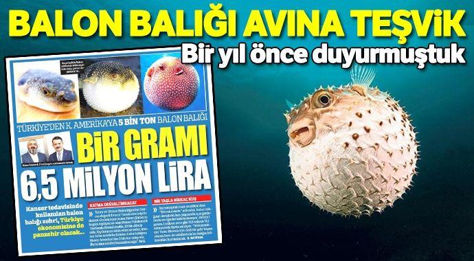 Balon balığı avcılığına teşvik getirildi