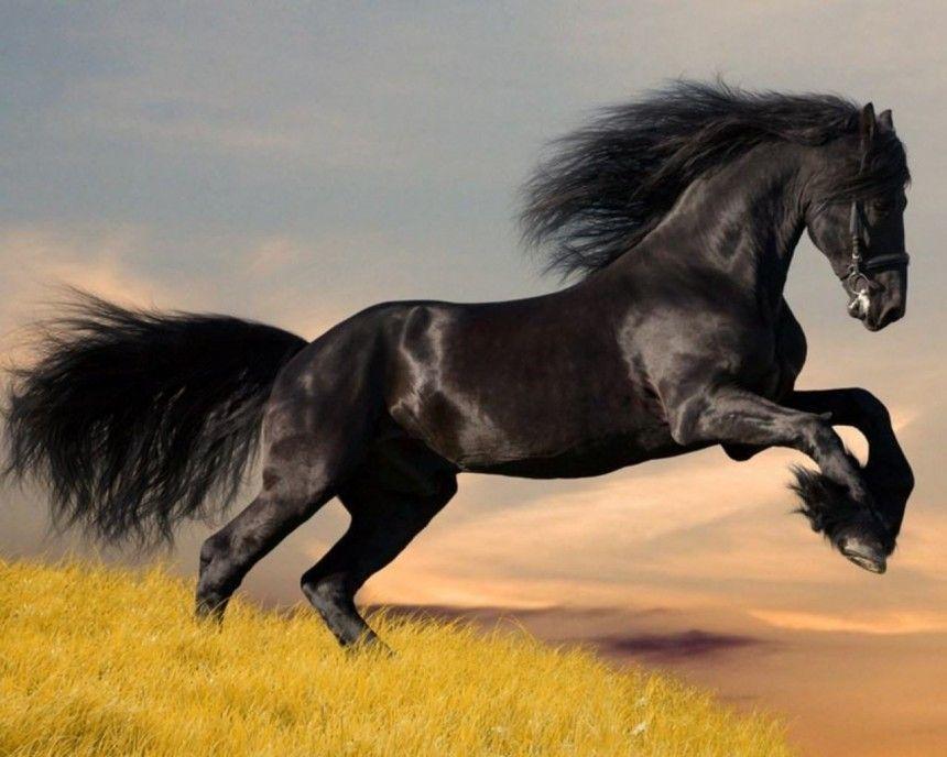 Dünyanın En Iyi Atları Hangileri 2018 En önemli At Cinsi Hangisi