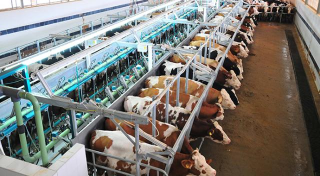 Hayvansal üretim istatistikleri açıklandı - tg mobile