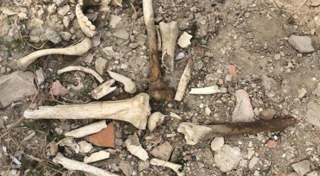 Cenevizliler'den kalma kale aklıntılarının arasından insan kemikleri çıktı