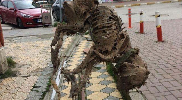 Asansör boşluğunda köpek iskeleti bulundu
