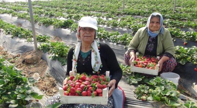 Mevsimlik tarım işçilerinin günlük ücretleri yüzde 12 arttı