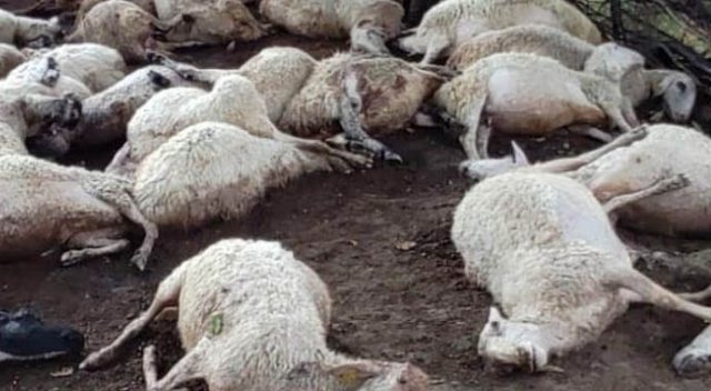 Aydın'da korkunç görüntü! Yan yana hepsi öldü...