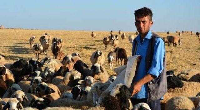 Çobanlıktan kalan zamanda ders çalışıp üniversiteli oldu