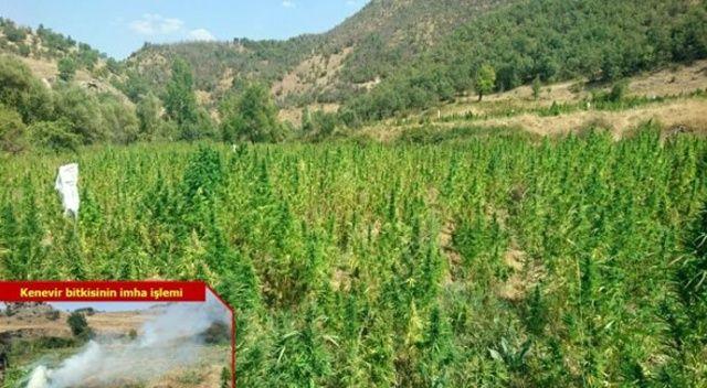 Diyarbakır'da uyuşturucu tarlası yok edildi