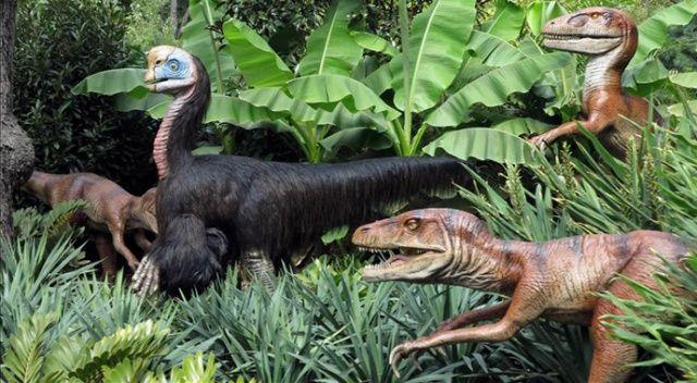 Çin'de 80 milyon yıllık dinozor yumurtası fosilleri bulundu