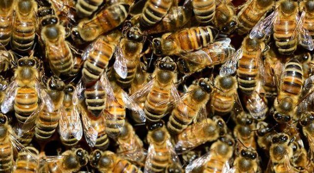 Kilis'te arıların saldırısına uğrayan kadın öldü