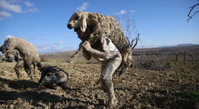 Şanlıurfa'da çamura saplanan hayvanlar için seferber oldular