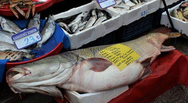Sezonun rekoru bu balık