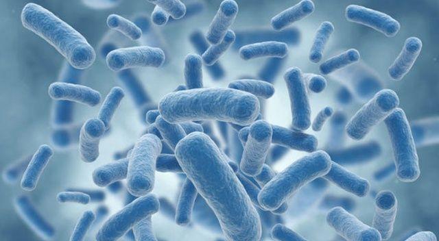 Talasemide mikrobiyota çalışmalarına 25 bin avro