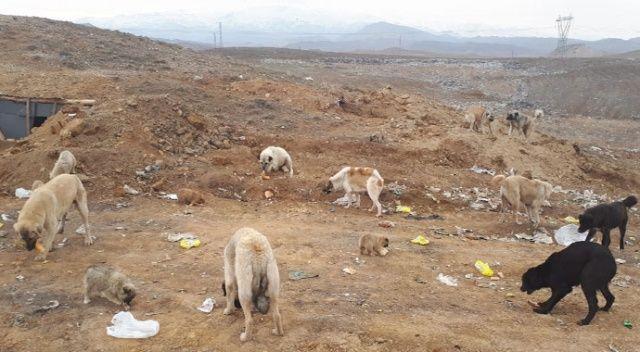 Sokak köpeklerini ölüme terkettiler