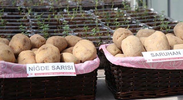 2 yerli patates çeşidi daha tescillendi