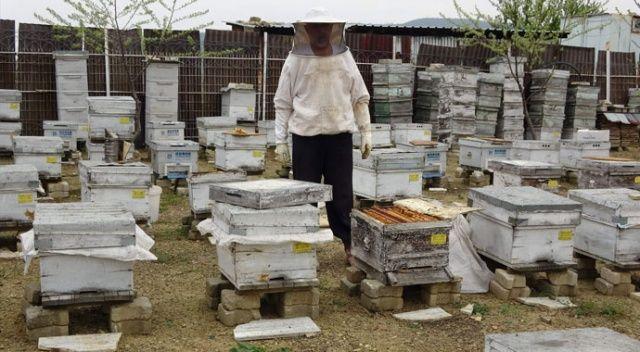 Arı alarmı