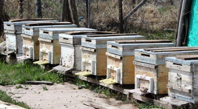 Bal arıları özgürlüğüne kavuştu