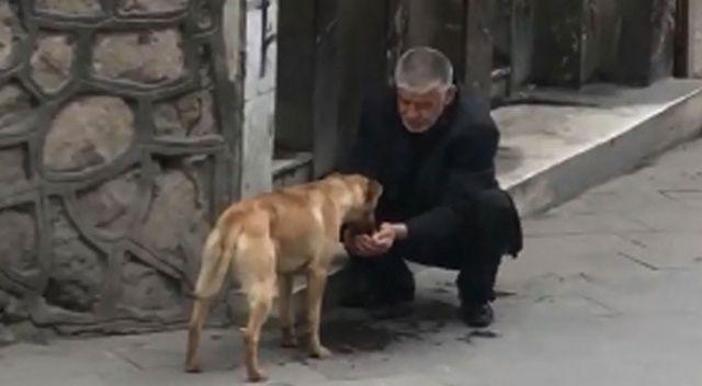 Taksici susayan köpeğe elleriyle su içirdi