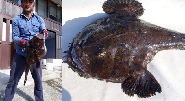 Rizeli balıkçılar o balığı ilk kez gördü