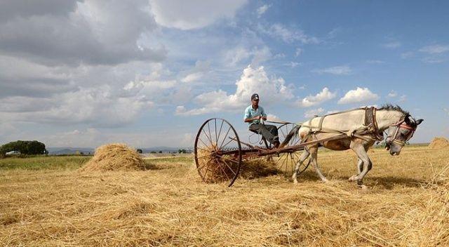 TMO alım fiyatlarını hasat öncesi belirleyecek