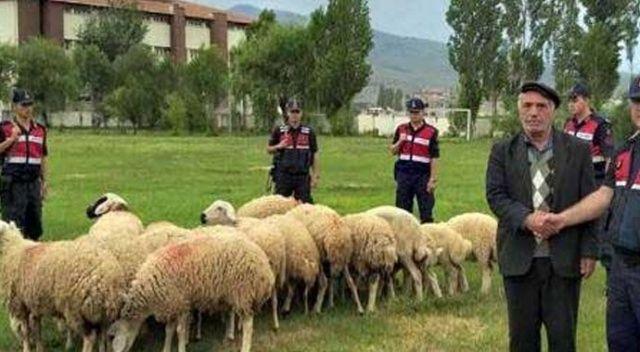 21 koyunu çalarak 11 bin TL'ye sattılar