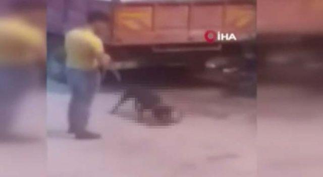 """Köpeğine sokak kedisini parçalattı, """"Hayvan severim"""" diye kendini savundu"""