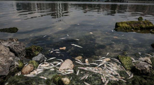 Küçükçekmece Gölü'ndeki balık ölümleri tedirgin ediyor