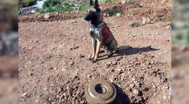 PKK'ya ağır darbe! Mayın imha edildi
