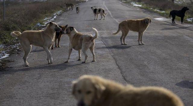 Sokak hayvanları için teklif: Fon kuralım, rant sona ersin