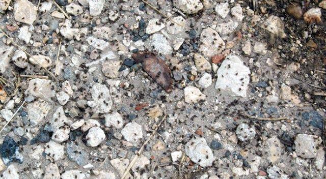 Tekirdağ'da mahalleyi böcekler bastı