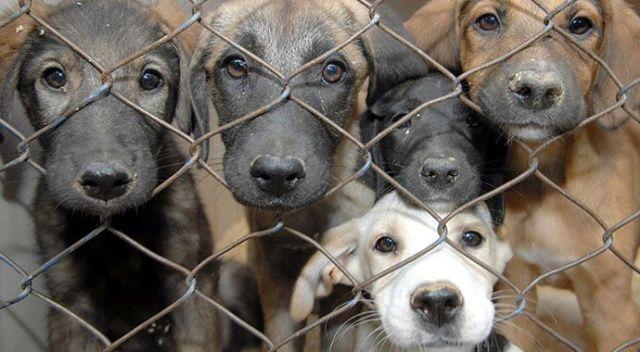 Antalya'da barınaktaki 'hayvanların öldürüldüğü' iddiasına soruşturma