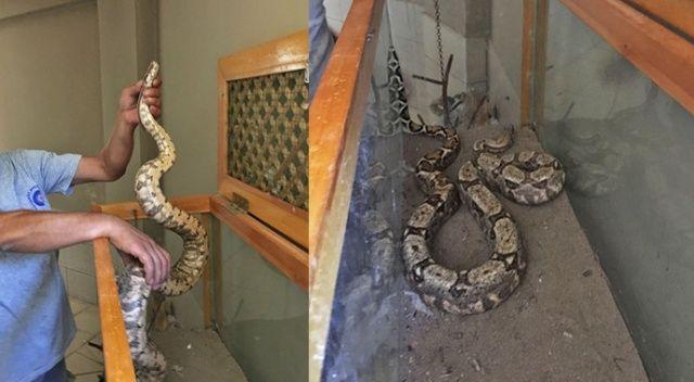 Antalya otogarında valiz içinde Boa yılanı ele geçirildi