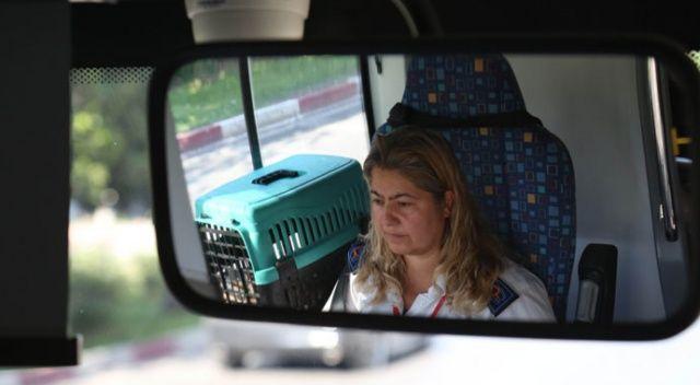 Engelli yavru kedileriyle otobüs şoförlüğü yapıyor