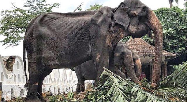 Gösteri filinin durumu yürek burktu