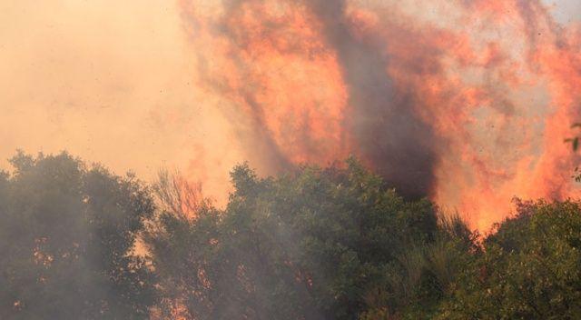Muğla ve İzmir orman yangınları devam ediyor ile ilgili görsel sonucu