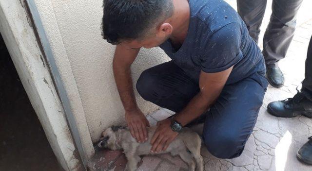 Otomobilde bırakılan köpek havasızlıktan öldü