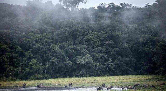 """AB'den """"Amazon ormanları"""" uyarısı"""