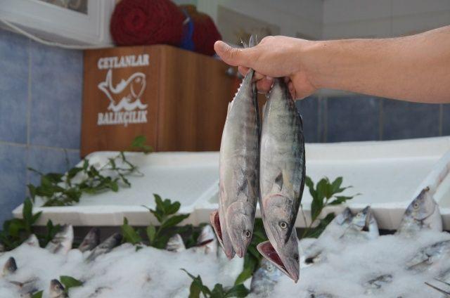 Balık fiyatları el yakıyor! Palamut fiyatı 7'ye katladı