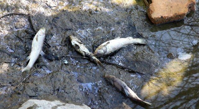 Barajdaki balık ölümleri balıkçıları endişelendirdi