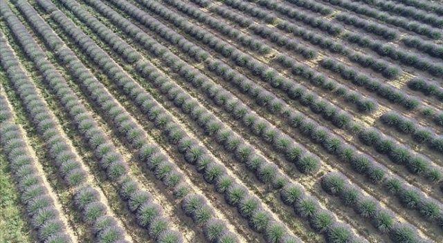 Çiftçilere müjde! 200 milyon metrekare Hazine arazisi kiraya verilecek