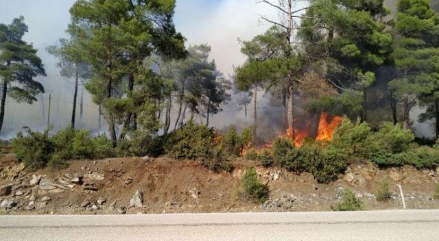 Ciğerlerimiz yanıyor! Bursa'da orman yangını